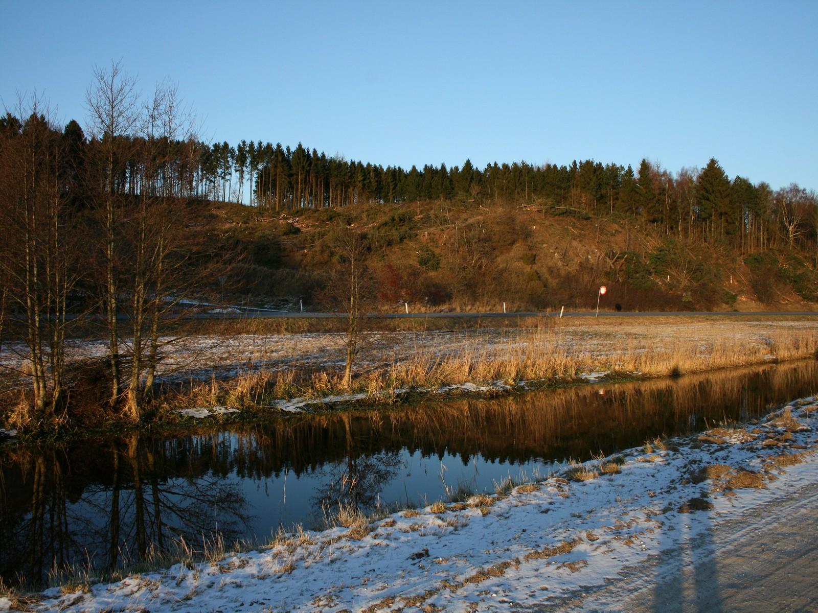 Ginnerup, skov